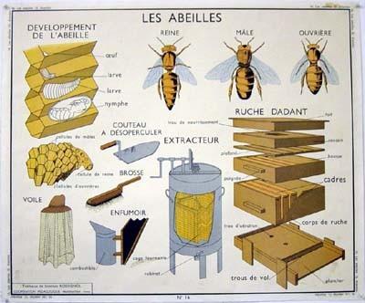 d couverte d 39 un essaim d 39 abeille gros plan sur un ph nom ne essentiel pour cet hymenopt re. Black Bedroom Furniture Sets. Home Design Ideas